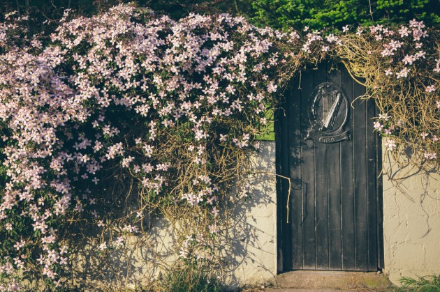 Glendalough, İrlanda. Ada kapılara çok uygun. Çiçek, arp. Her şey gerektiği gibi.